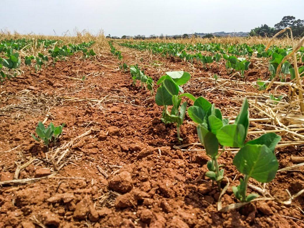 Produção de soja em Capão Bonito